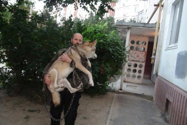 Несколько лет в Волгограде с волком делит квартиру семья Ивана. Несмотря на неудобства, которые доставляет домашним соседство с хищником, Иван расставаться с любимцем не собирается. Молодой