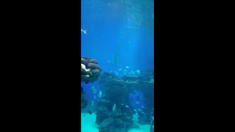 аквалангист кормит акул и других рыб