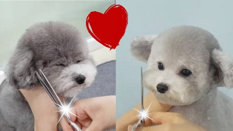 World Best so cute Haircuts by @spicedogsss