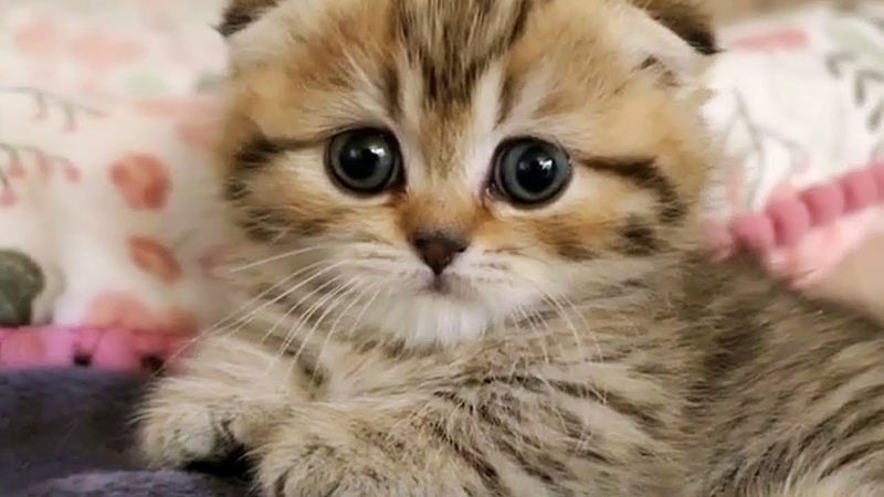 This Little Kitten Will Instantly Improve Your Day