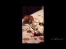 собаки VS кошки 2