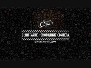 RUSSIA_CESAR__Ok.ru+Vk.com 111