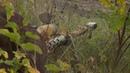 Охота на снайперов непризнанных республик ЛНР ДНР