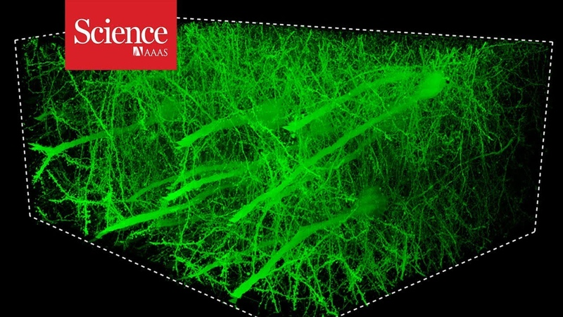 Snippet Mesmerizing images of the fly brain captured at record speed