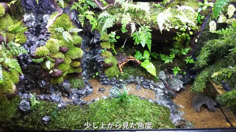Japanese paludarium vivarium Newt Tank Japan