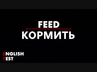 English test | feed