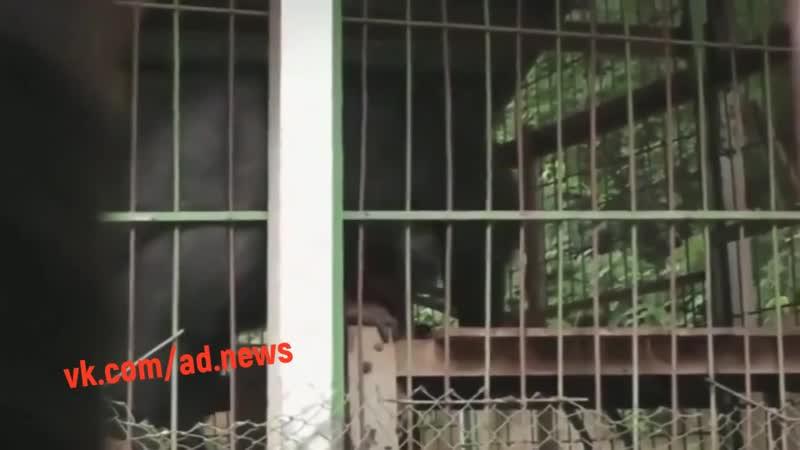 Медведь решил перекусить работником зоопарка