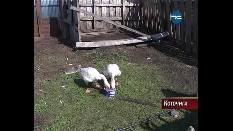 День домохозяйки и домохозяина