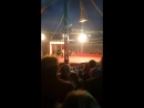 Цирк ,, Шапито,, Полоцк (Белые тигры)