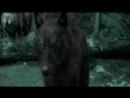 [v-s.mobi]Закон Стаи.Клип про волков (описание).mp4