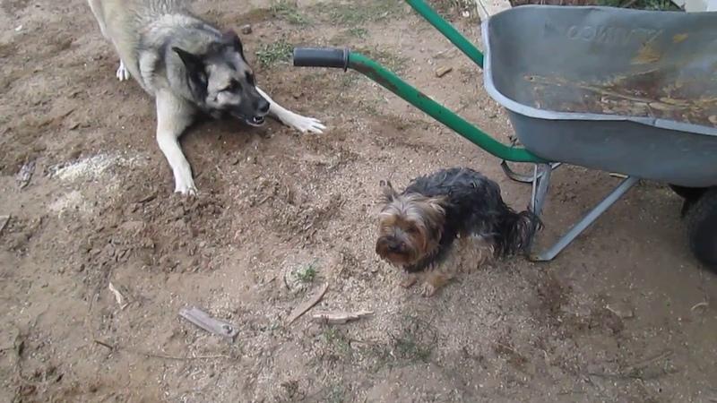 Грей и Симекс на прогулке во дворе