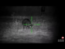 Hog stalk with ATN X-SIGHT II HD 5-20x.mp4