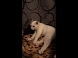 Подопечный Благотворительного Фонда Хочу Жить Алекс ( кот инвалид)