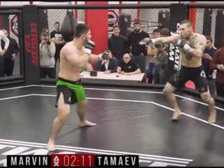 Асхаб Тамаев VS Филипп Марвин. Полный бой по правилам MMA. Дневник Хача