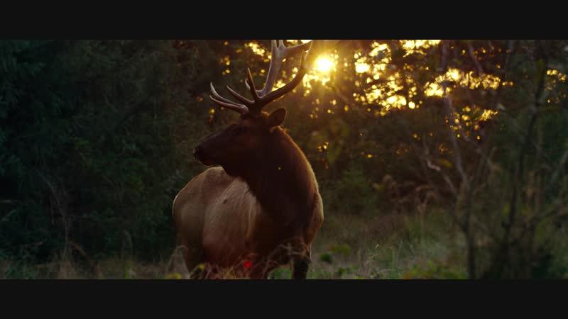 The Redwoods национальный парк Редвуд