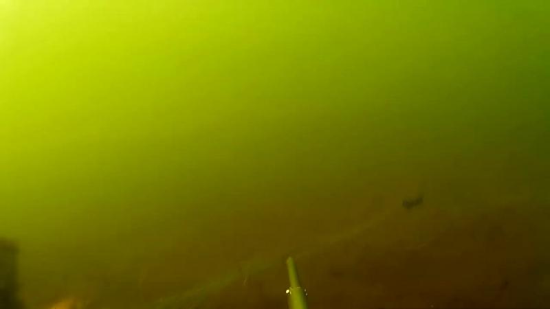 Подводная охота 2017. Толстолоб и Карп.