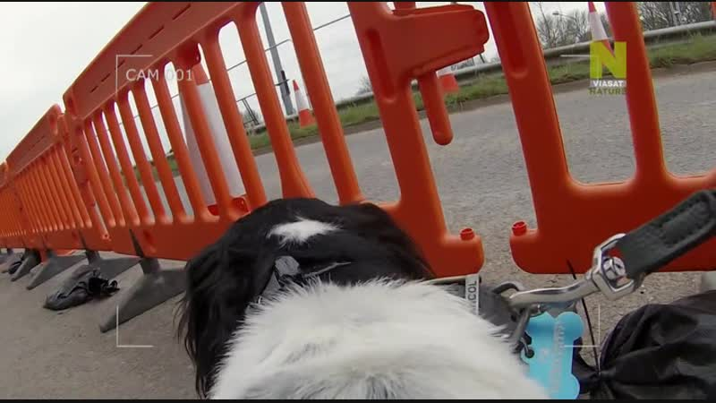 Секретная жизнь собак Dogs Their Secret Lives 2015 3