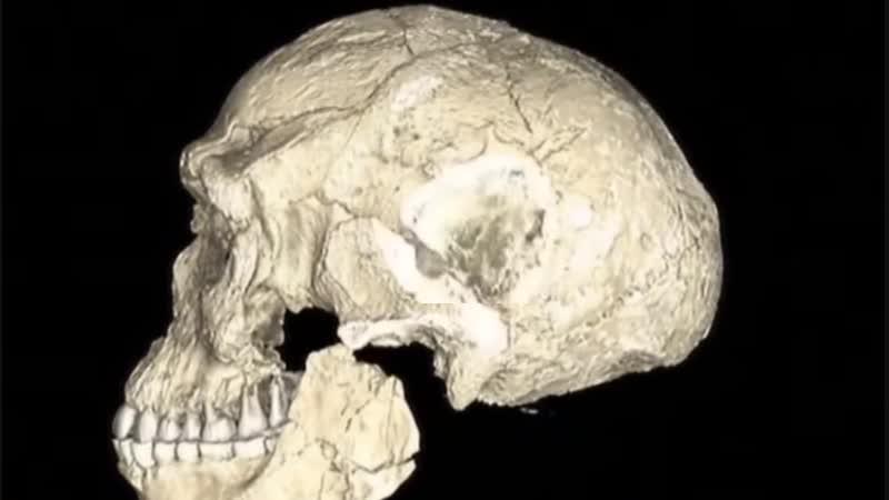 Найден череп человека 2 млн лет... Как же Дарвин?