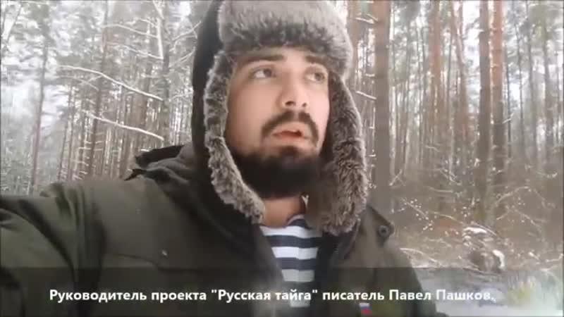 Павел Пашков_ о лесах России _ Важное обращение к общественности