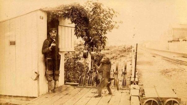 стрелочник джек однажды в 1880-х годах железнодорожный стрелочник джеймс эдвин уайд прогуливался по оживлённому южноафриканскому рынку и стал свидетелем сюрреалистического зрелища: медвежий