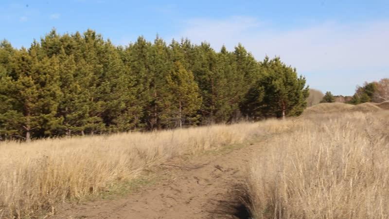 Чупинский бор прирос на 10 га благодаря спонсорской программе Подари лес другу