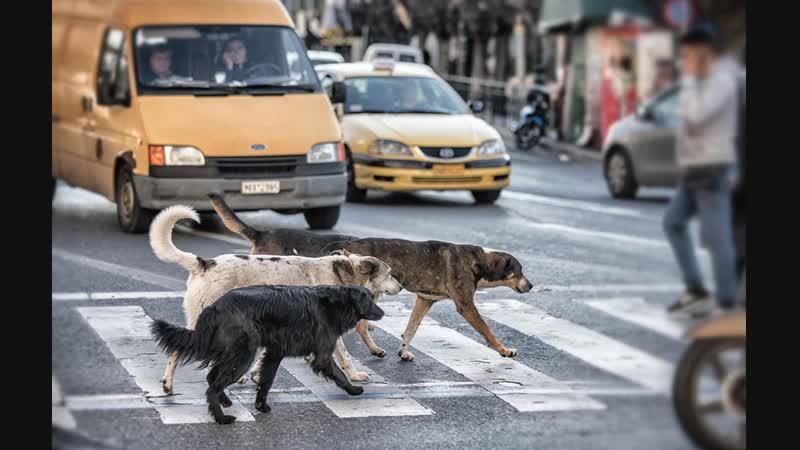 Андрей Тупикин Бездомные собаки глазами биолога