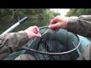 Не зря поставил этот воблер Щука сразу начала клевать Ловля на воблеры осенью Рыбалка