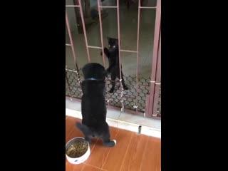 Самый милый побег и помощь друга! 😍
