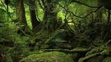Тропический лес Сол Дак. Вашингтон. США