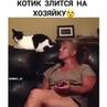 """🎞🐱🐶ЗАБАВНЫЕ ВИДЕО ЖИВОТНЫХ on Instagram """"Когда твоя хозяйка тебя раздражает 😁 . ❤️Ставь Лайк, если любишь животных 💬Оставляй комментарии 👥Отмечай ..."""