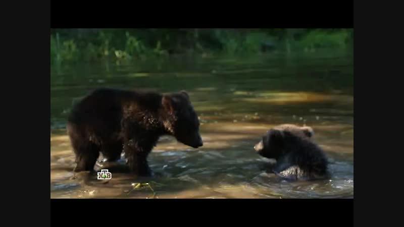 Центр спасения медвежат-сирот.