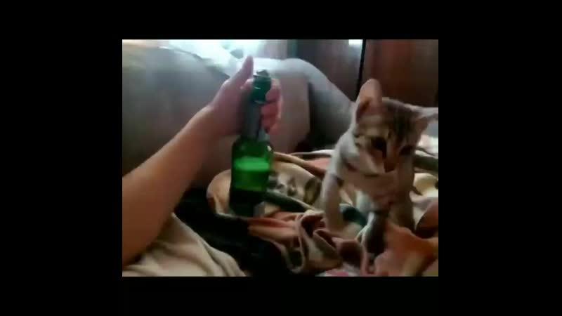 Котя, открой...