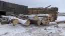 Задержаны пятеро жителей Удмуртии, подозреваемых в незаконной рубке лесных насаждений.