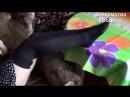 Kristina ножки в черных гольфах feet in black stockings pantyhose Ножки Фетиш Фут Foot Fetish Чулки Legs Секси
