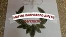 ЗАГОВОР-ОБРЯД НА ЛАВРОВЫЙ ВЕНОК, МАГИЯ ЛАВРОВОГО ЛИСТА