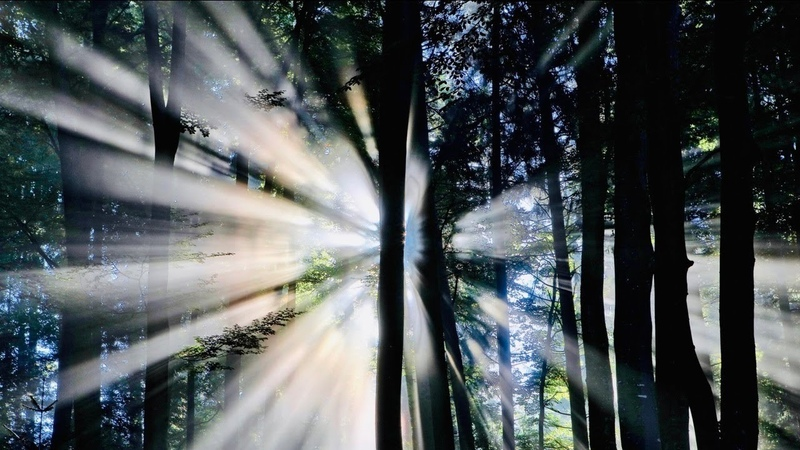 AZALEH - Forest Flow