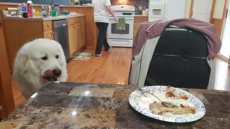 Голодный пёс Best Twitch Clips
