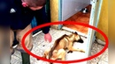 Dieser Hund hat 10 Monate nichts gegessen, dann kümmerte sich jemand!