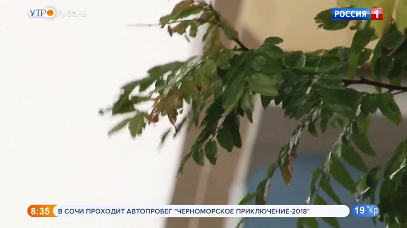 Сильные дожди с грозами и градом прогнозируют на Кубани