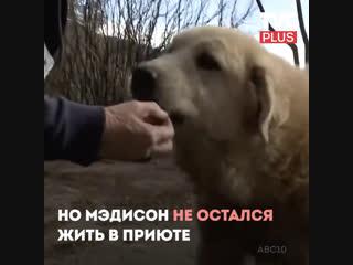 Преданная собака