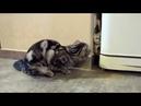Короткие приколы про котов