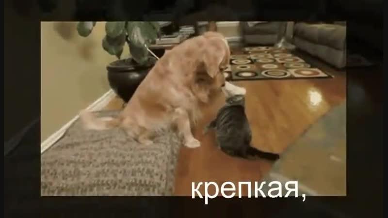 Денис Майданов - Друзьям  Когда свой лучший день друзьям подаришь, То жизнь опять понятна и проста. Есть в мире вещи главные – т