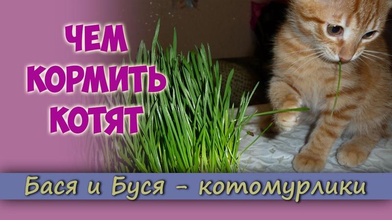 Чем кормить котят Питание котят Как кормить правильно