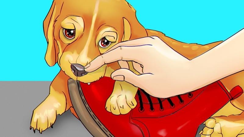 10 Простых Способов Дрессировать Собаку Дома