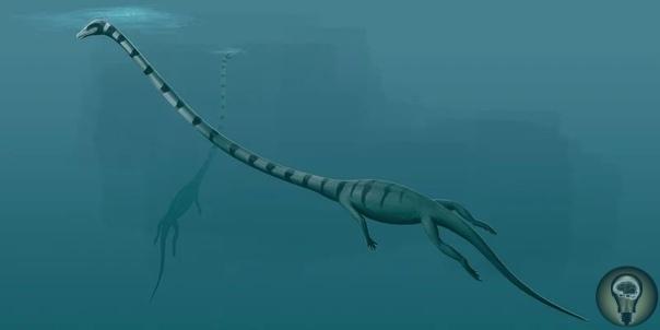 5 чудовищ царствовавших до динозавров В этой статья мы познакомим вас с существами, которые были грозными хищниками и стояли в верхушке пищевой цепи еще до прихода динозавров. Аномалокарис