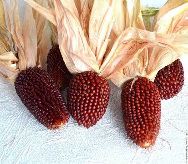 фото земляничной кукурузы лука