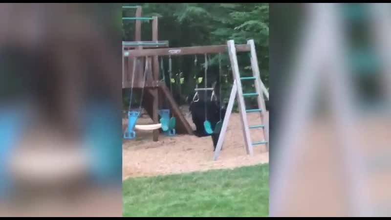 Жительница Коннектикута сняла видео, где медведица выгуливает двух медвежат на детской площадке прямо на заднем дворе ее дома.