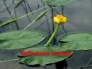 Растения Красной книги окрестностей Калтанского городского округа