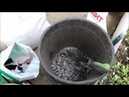 Высаживаю огурцы в теплицу Что добавила в грунт