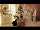Заказать деда мороза и снегурочку на дом 7 (999) 985-48-77.